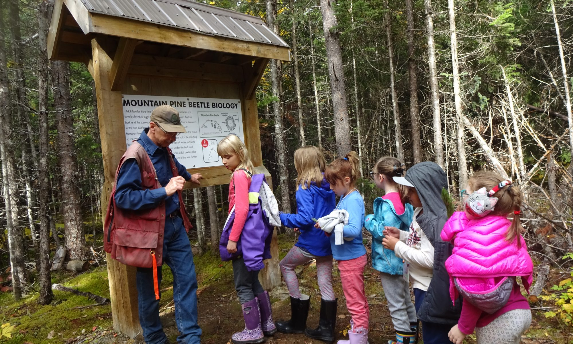 Kids learning about impacts of pine beetle on forests